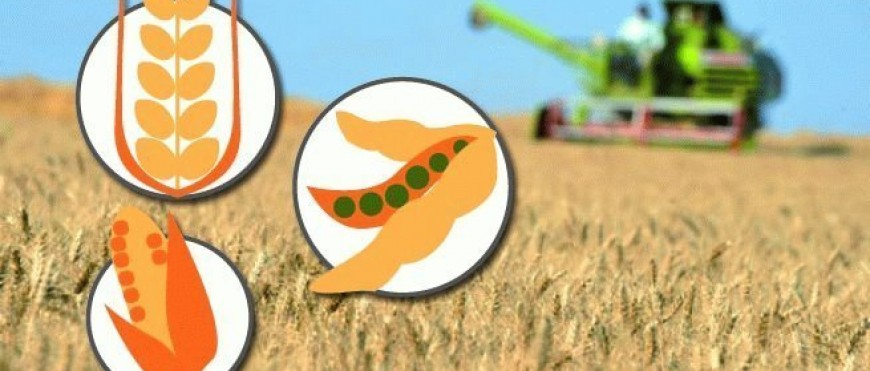 Chicago: suben precios agrícolas antes del informe del USDA
