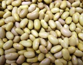 Le pagan a 50 productores por sus cosechas de frijol