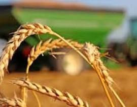 Producción mundial de maíz, trigo y soya al alza.