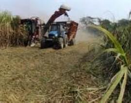 Secretaría de Economía da a conocer el monto del cupo máximo para exportar azúcar a los Estados Unidos de América.